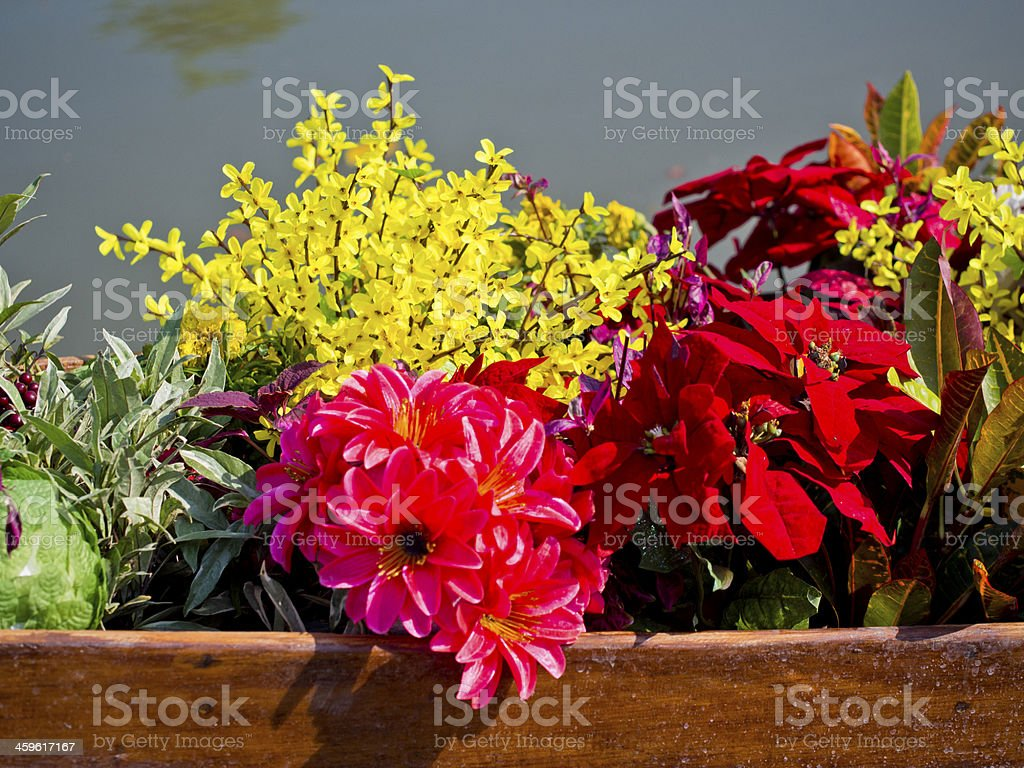colorful flower on boat outdoor royalty-free stock photo