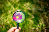 colorful flower through a magnifying glass