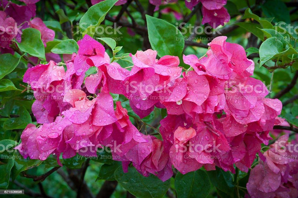 Colorful flower with drop water. Lizenzfreies stock-foto