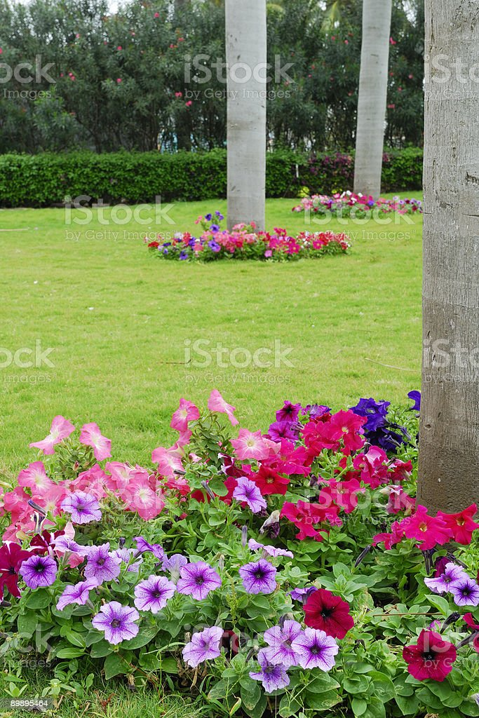 Colorful flowerbed and coconut trees royalty-free stock photo