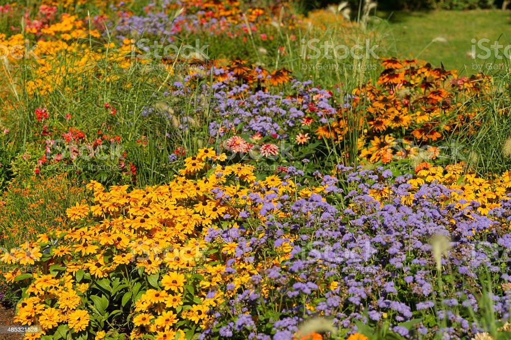 Bunte flowerbed – Foto