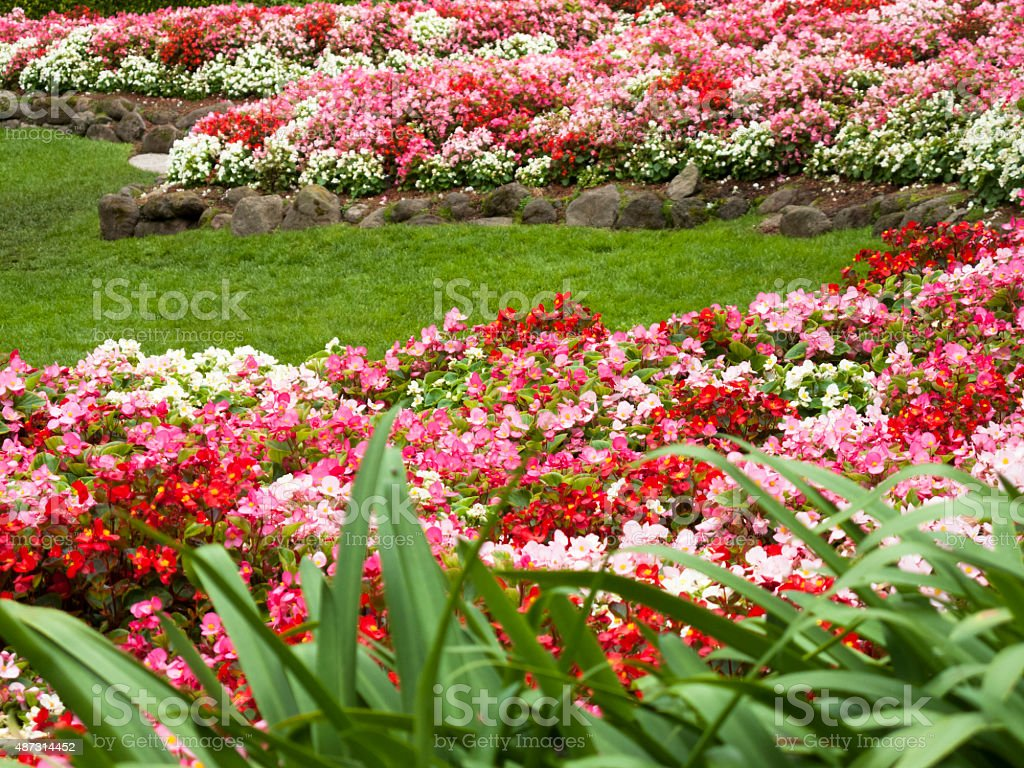 Colorful Flowerbed stock photo