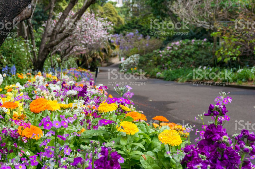 Colorful flowerbeds along the alley in the park stock photo