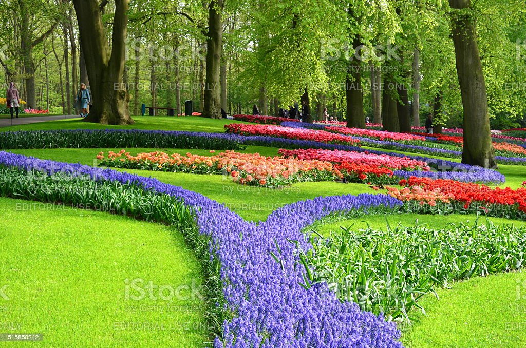 Colorful flowers and blossom in dutch spring garden Keukenhof. stock photo