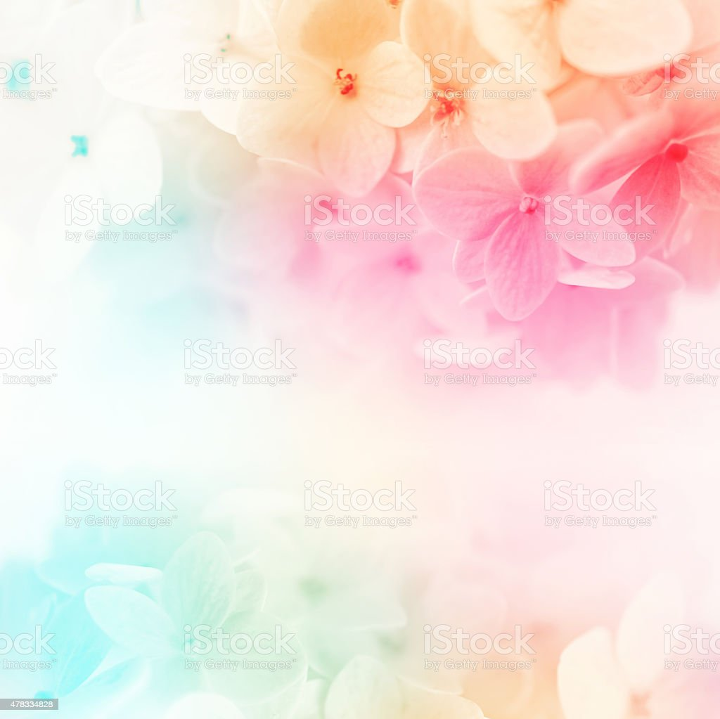 Colorful Flowers Background Fresh Summer In Soft Style Stock Photo