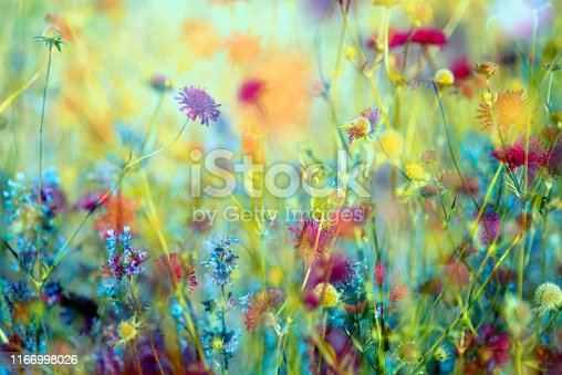 Colorful flowers background  abstract from sweden