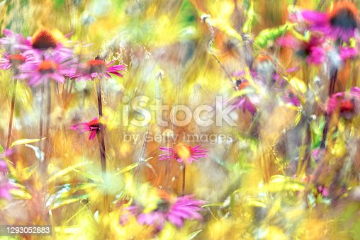 Colorful flowers background from sweden