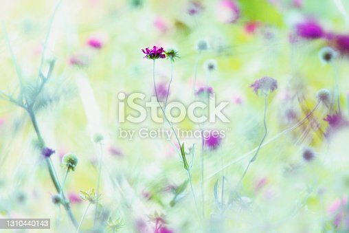 Colorful flowers background  from sweden nature