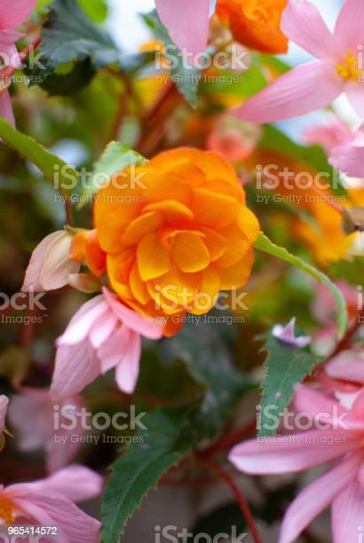 Foto de Flores Coloridas Fundo e mais fotos de stock de Enfeitado