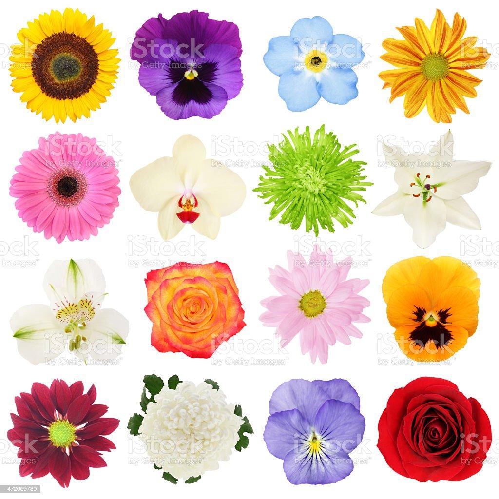 Raccolta di fiori colorati fotografie stock e altre for Fiori stilizzati colorati