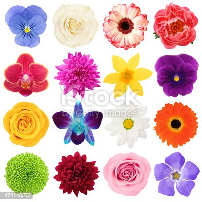16 different colorful flowers head, view from top isolated on white
