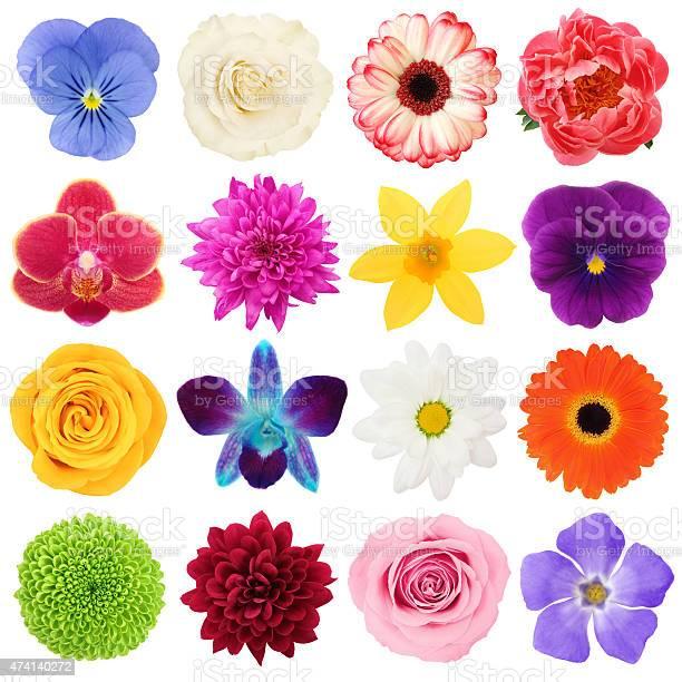 Colorful flowers collection picture id474140272?b=1&k=6&m=474140272&s=612x612&h=wnvzhhs7zbcbfujqhlajtm3mjxzq6jc bdjkjpx9mwg=