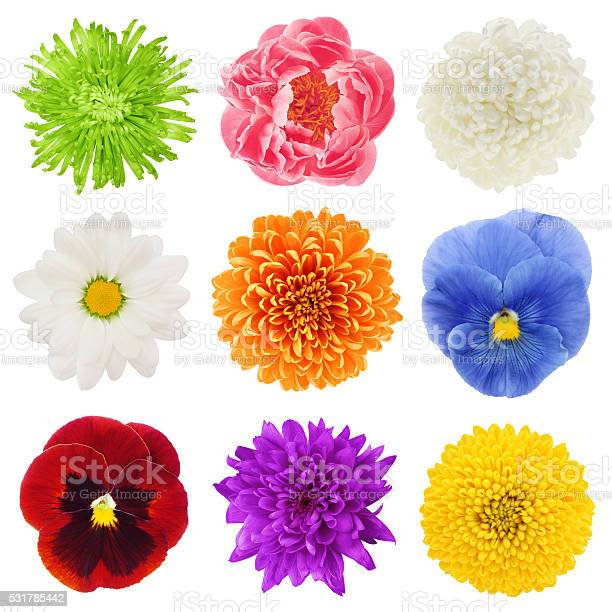Photo of Colorful Flowers Collection