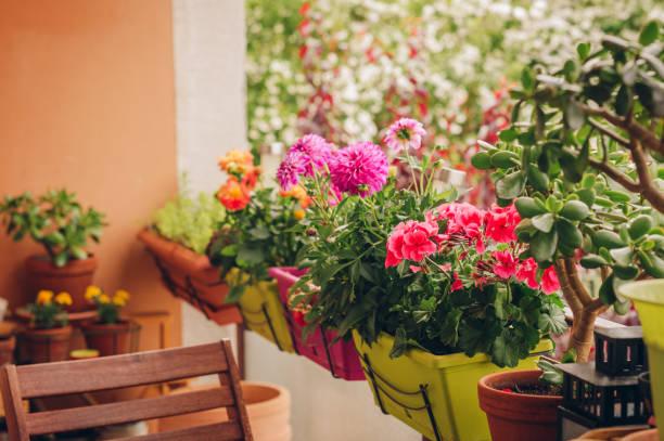 Bunte Blumen wachsen in Töpfen auf dem Balkon – Foto