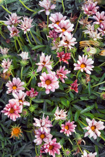Colorful flowers in bloom picture id1155048022?b=1&k=6&m=1155048022&s=612x612&w=0&h=ylkworq1geci57m8flwtpvnbtxc4efgrvelvbqvwfd4=