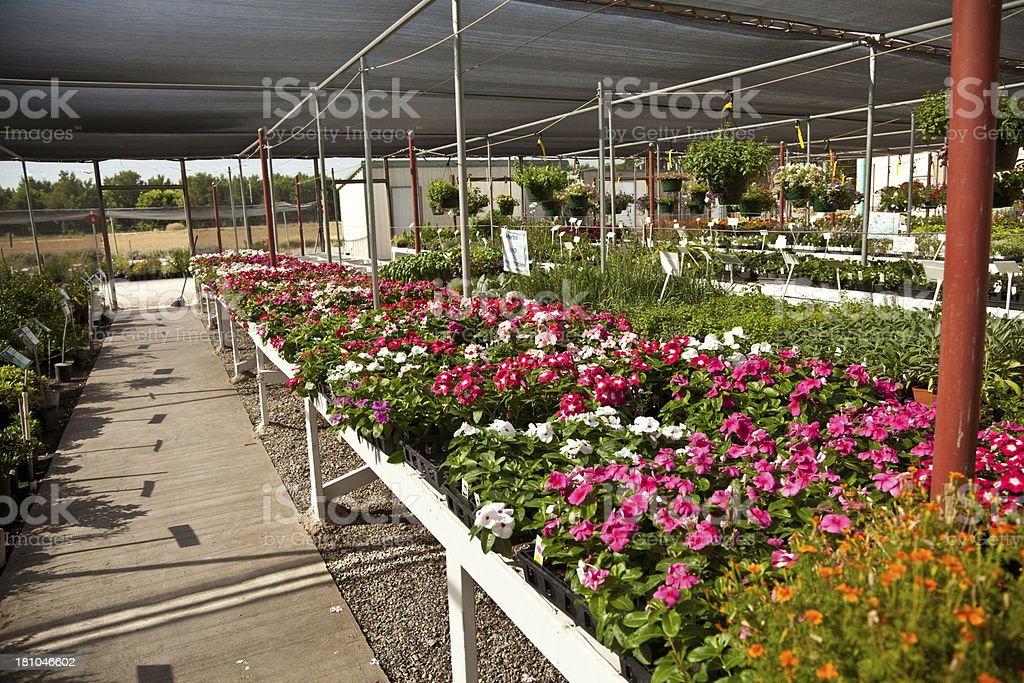 Colorful Flowers in Plant Nursery royalty-free stock photo