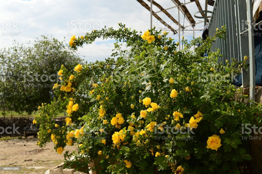 Colorful flowers in the a lovely garden of country royalty-free stock photo