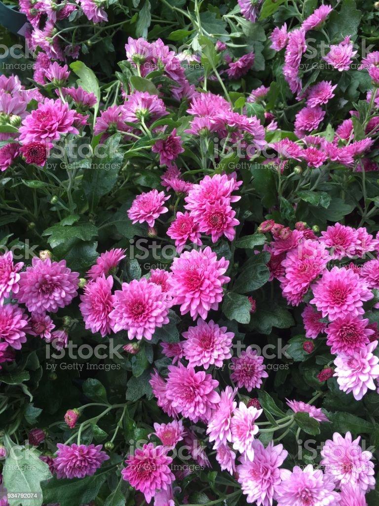 정원 배경에서 화려한 꽃 - 로열티 프리 개체 그룹 스톡 사진