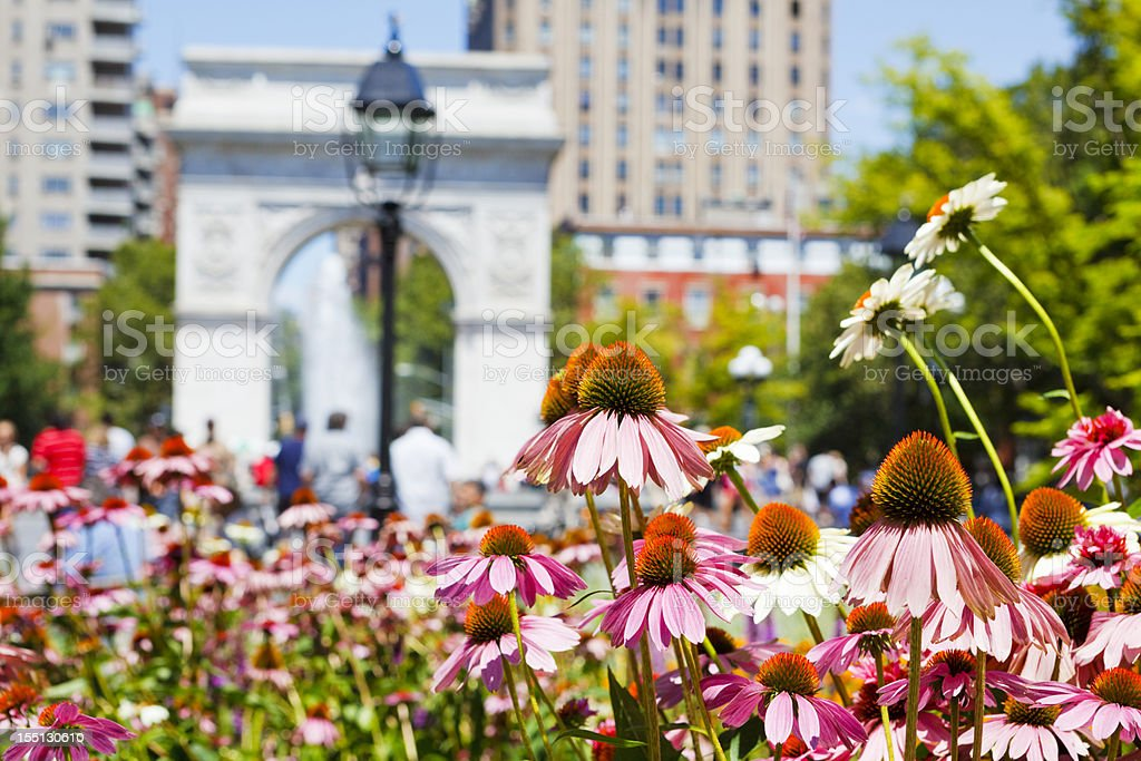 Colorful Flowers in Washington Square Park stock photo