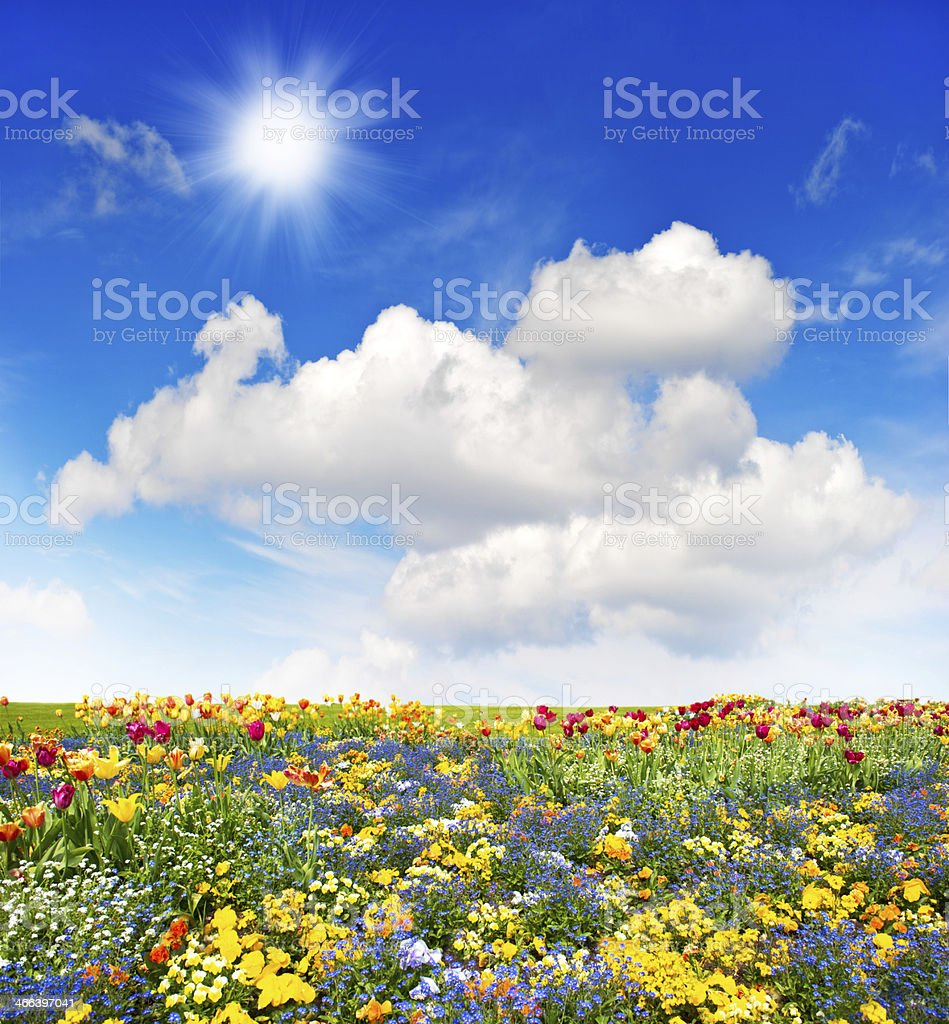 colorful flowers meadow and green grass field over blue sky stock photo