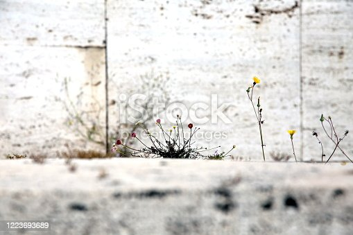 Colorful flowers on the stone