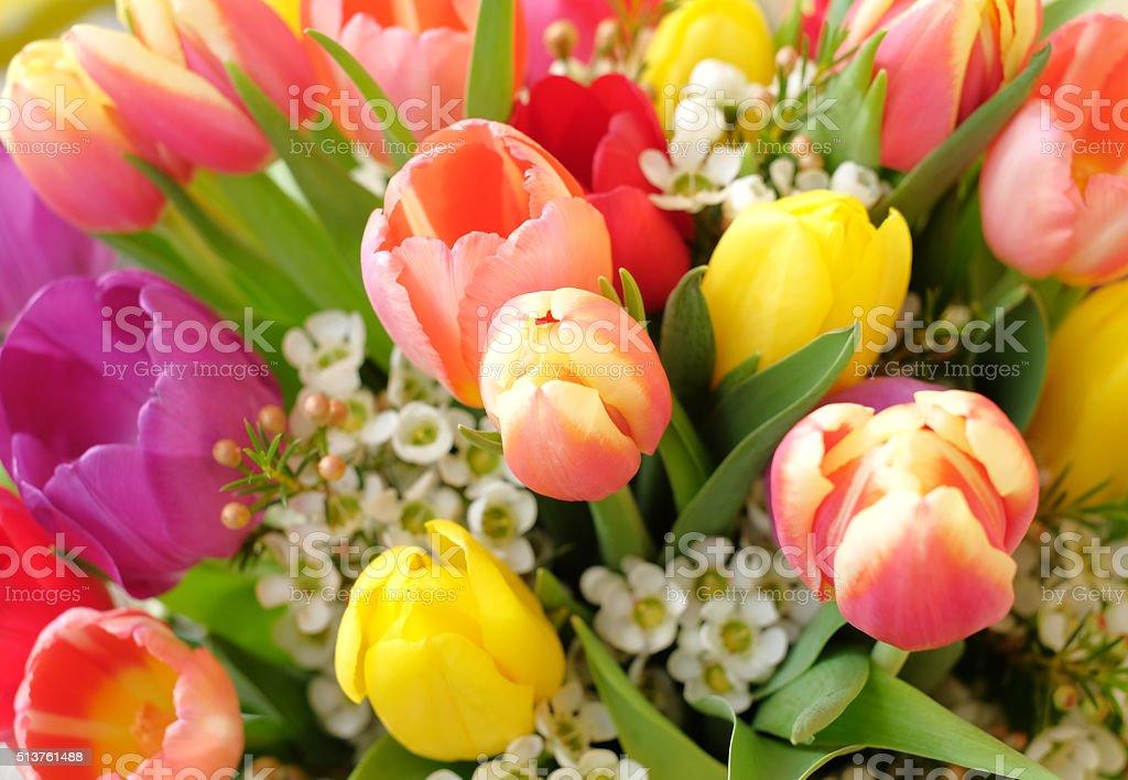 Bunte Blumen – Foto