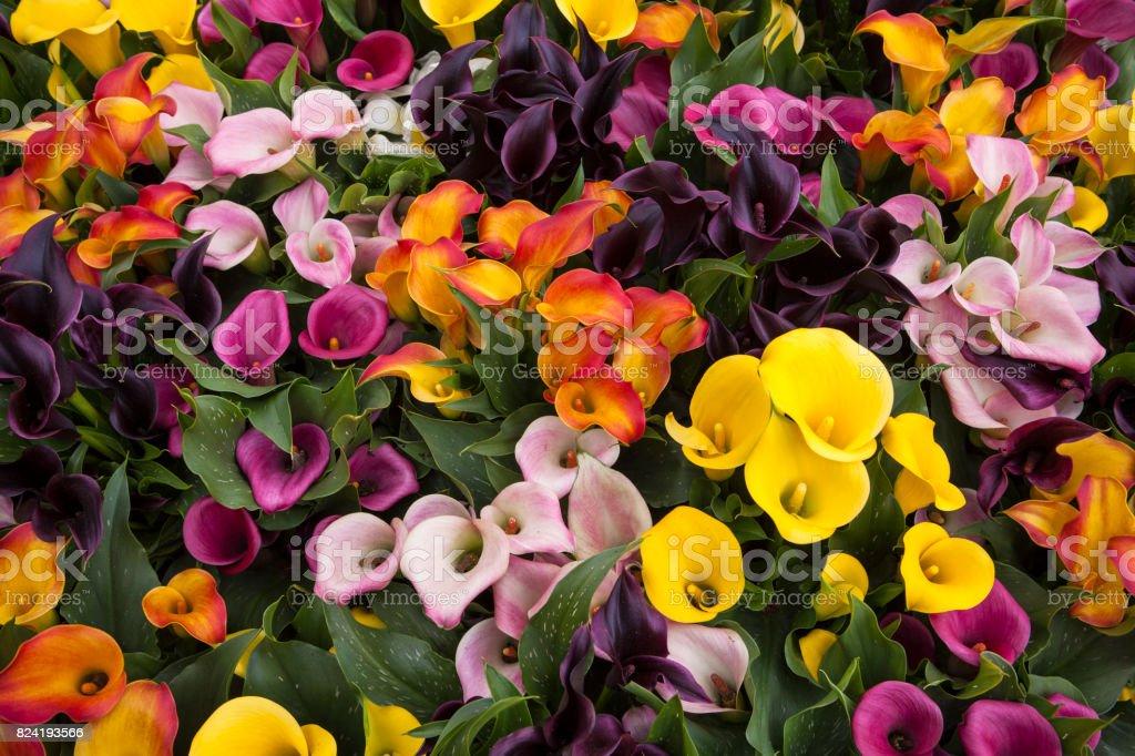 Fleurs colorées  - Photo