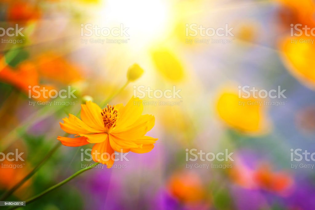 Colorful flowers. stock photo