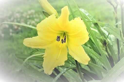 색상화 꽃 0명에 대한 스톡 사진 및 기타 이미지