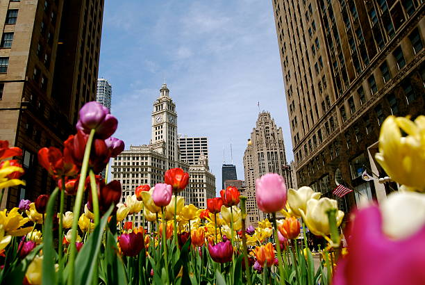 Colorful flowers welcoming spring in the city stock photo