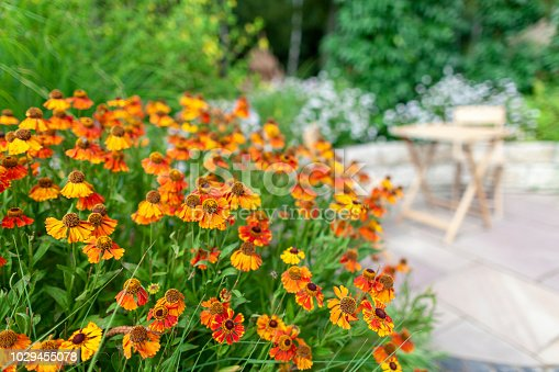 Colorful flowers with garden furniture in the background