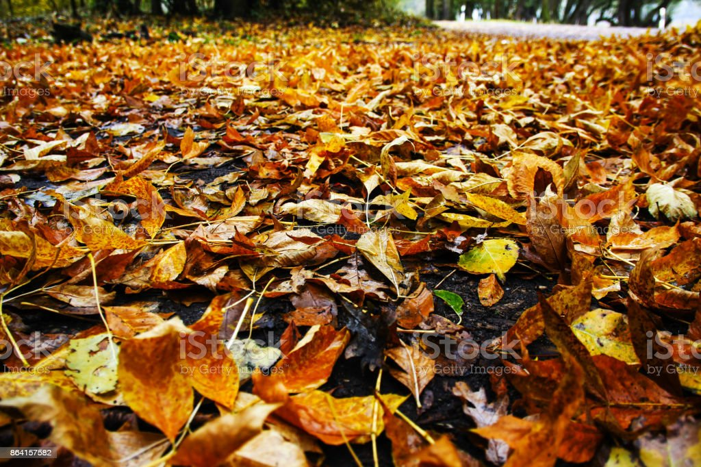 colorful foliage covers the ground royalty-free stock photo
