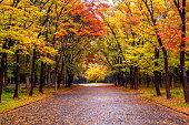 Colorful foliage in autumn park. Autumn seasons.