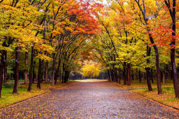 Colorful foliage in autumn park. Autumn seasons. stock photo