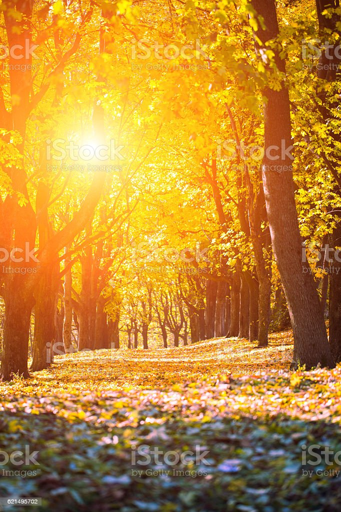 Colorful foliage in the autumn park. Nature Lizenzfreies stock-foto