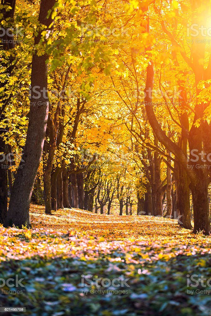 Colorful foliage in the autumn park. Nature foto stock royalty-free
