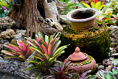 colorful foliage on bromeliad plant orchid flowers