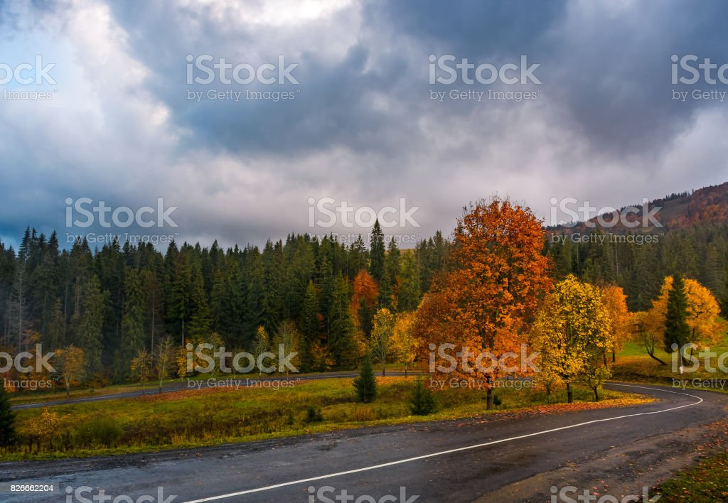 colorful foliage on serpentine in rainy fall weather stock photo
