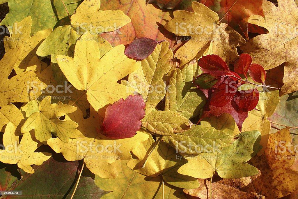 colorful foliage royaltyfri bildbanksbilder