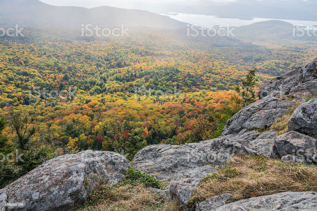Colorful Forest Canopy With Mist stock photo