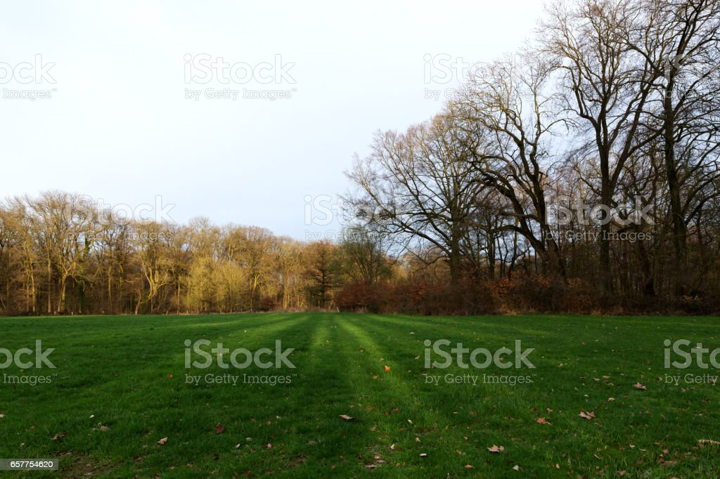 Colorful Forest Glade at Sunset/ Germany stock photo