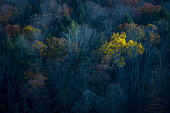 usa, Aerial View, Autumn, Green Color, Red