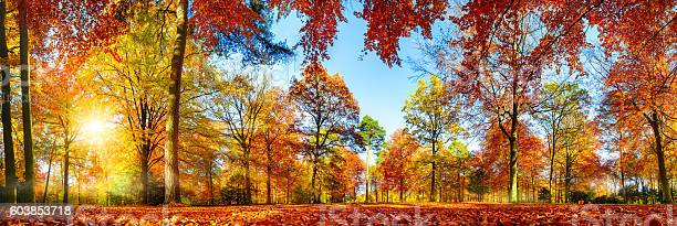 Photo of Colorful forest panorama in autumn