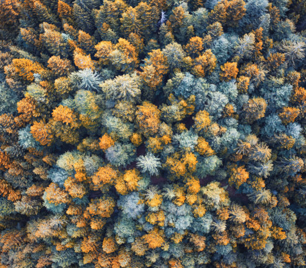 colorful forest - borchee stock pictures, royalty-free photos & images