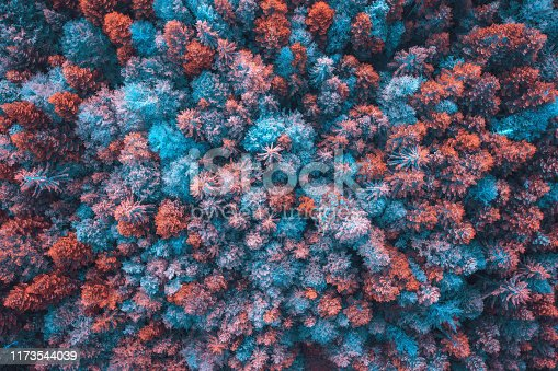 Surreal colorful forest. Aerial view.