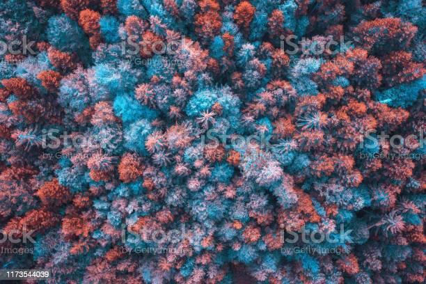 Colorful forest picture id1173544039?b=1&k=6&m=1173544039&s=612x612&h=dzbo66fkboznwd1mf jfntvzi3r7ftu2078nx3hyi0k=