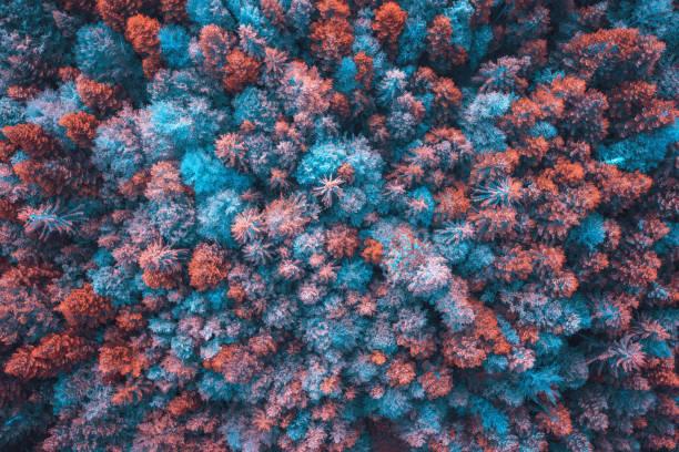 Bunter Wald – Foto