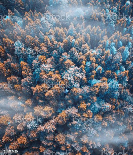 Photo of Colorful Forest
