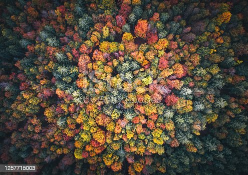 Natural pattern: Aerial view on mixed forest in autumn colours.