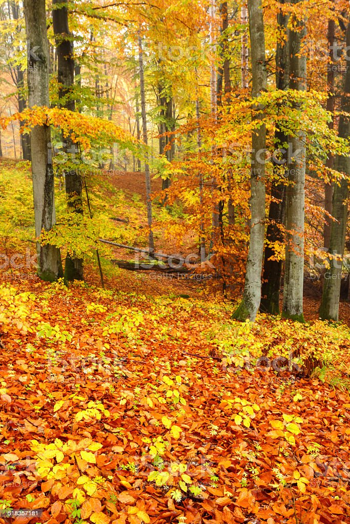 Colorful Forest. stock photo